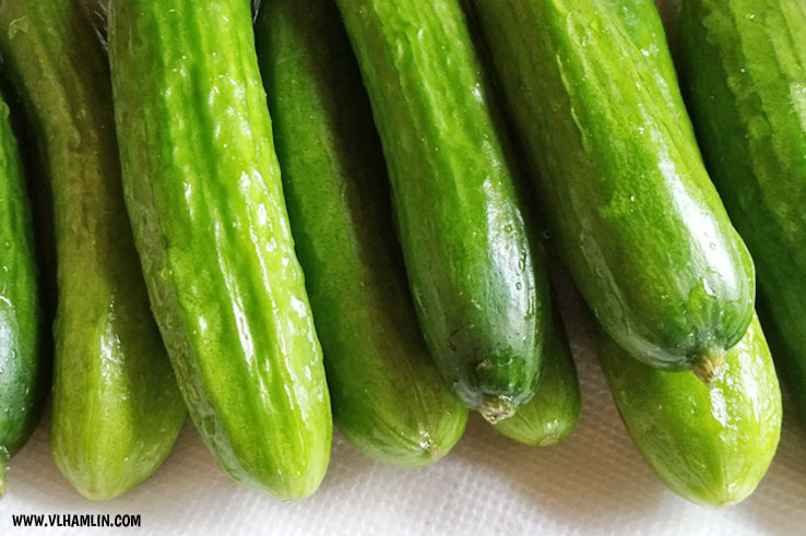 QUICK AND EASY HOMEMADE REFRIGERATOR PICKLES 2