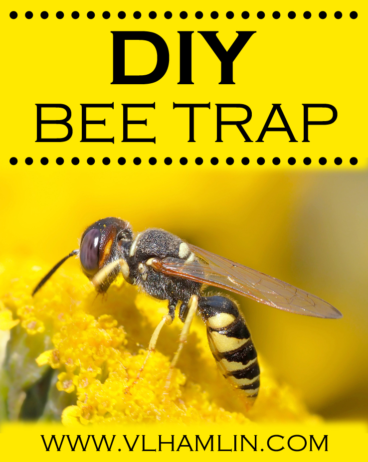 DIY BEE TRAP