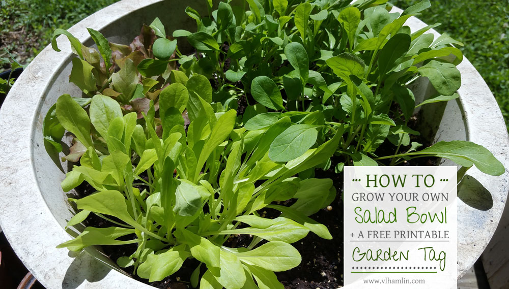 How to Grow Your Own Salad Bowl + Free Printable Garden Tag 2