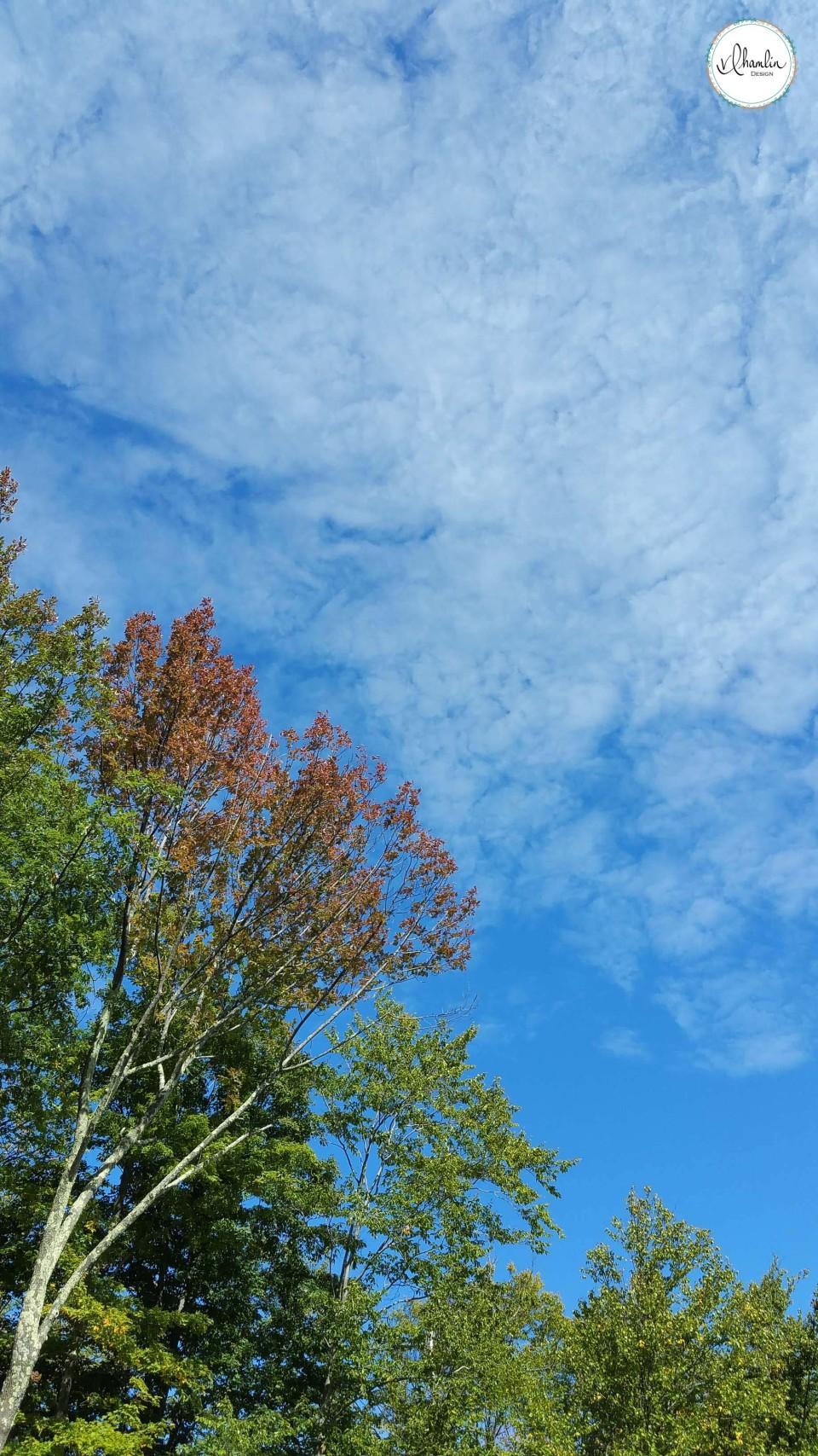 Fall snapshots 4