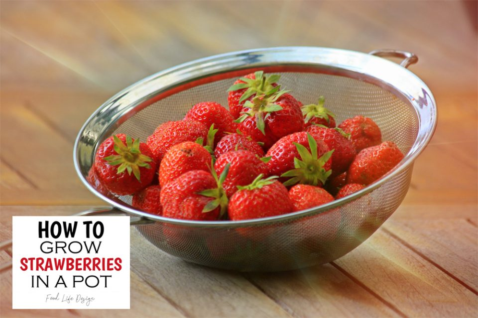 How to Grow Strawberries Inside - Food Life Design