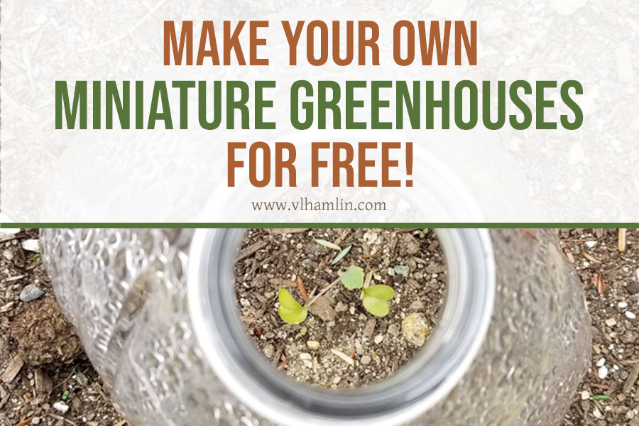 Make Your Own Miniature Greenhouse