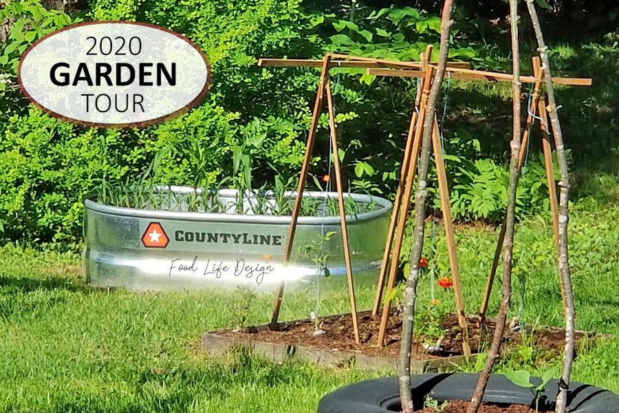 2020 Garden Tour - Corn and Tomatoes - Food Life Design