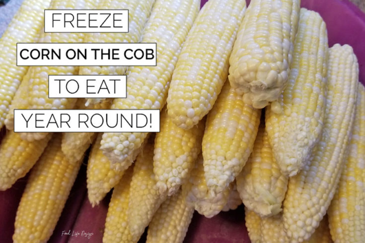 Freeze Corn on the Cob to Eat Year Round - Food Life Design