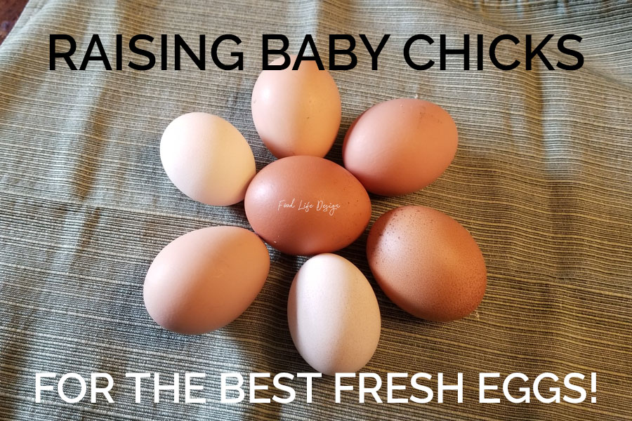 Raising Baby Chicks for Fresh Eggs - Food Life Design